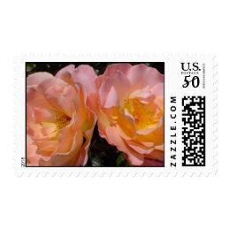 'A Perfect Pair' Soft Orange Roses Postage