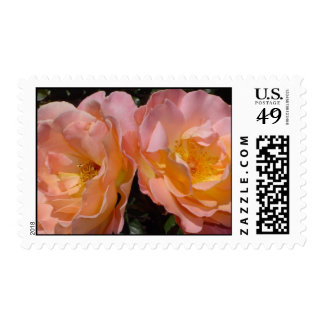 'A Perfect Pair' Soft Orange Roses Postage Stamp