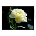 A Perfect Rose To Say I Love You or Thank You Card