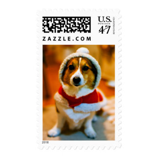 A perplexed dog in Christmastime Postage