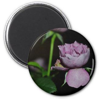 A Petal of a Rose Magnets
