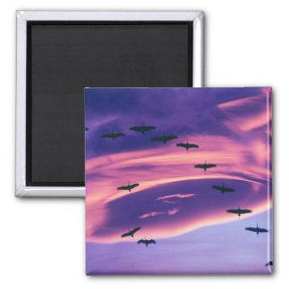 A photo composite of Sandhill cranes in flight Fridge Magnet