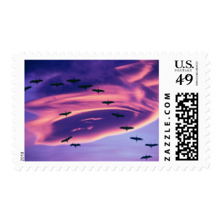 A photo composite of Sandhill cranes in flight Postage
