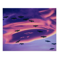 A photo composite of Sandhill cranes in flight Poster