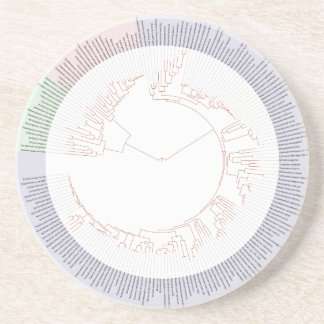 A phylogenetic tree of life Chart Coaster