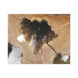 A picture of a fallen tree with a hole in middle canvas print