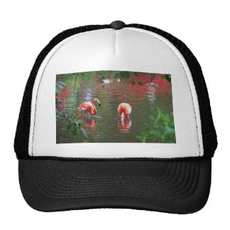 A piece of the paradise flamingo hat