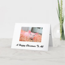 A pig happy Christmas for all Holiday Card
