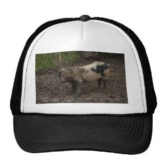 A pig in muck cap