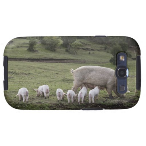A pig with piglets in a field galaxy SIII case