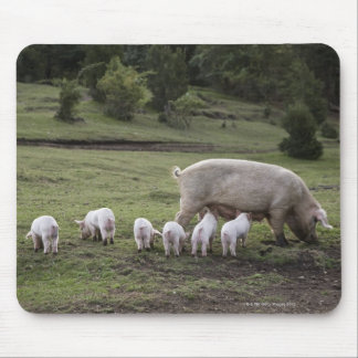 A pig with piglets in a field mousepads