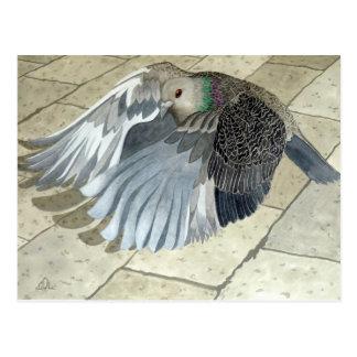A Pigeon in flight Postcard