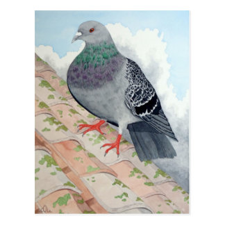 A Pigeon rests on a roof Postcard