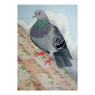A Pigeon rests on a roof Print
