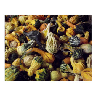 A Pile of Gourds Post Card