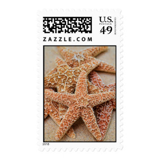 A Pile of Large Sugar Starfish Postage Stamps