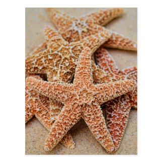 A Pile of Large Sugar Starfish Postcard
