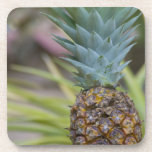 A Pineapple Drink Coaster