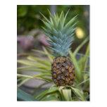A Pineapple Postcards