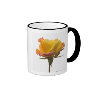 A pink and yellow rose after an afternoon rain ringer coffee mug