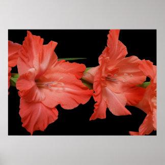 a pink gladiola poster