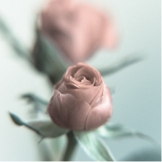 A Pink Rose for your Sweetheart... Statuette