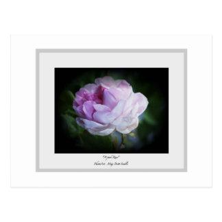 """A Pink Rose"" Postcard"