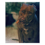 A Pit Bull Portrait Chewing a Cigar Poster