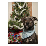 A pit bull posing for a Christmas portrait. Greeting Card