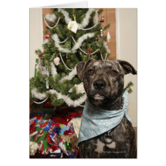 A pit bull posing for a Christmas portrait. Card