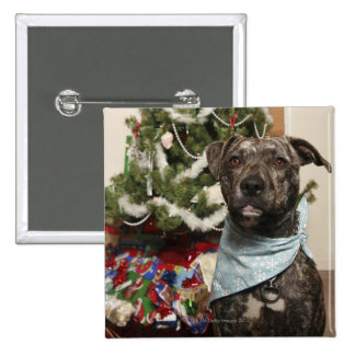 A pit bull posing for a Christmas portrait. Pinback Button