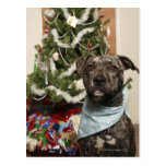A pit bull posing for a Christmas portrait. Postcard