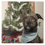 A pit bull posing for a Christmas portrait. Tiles