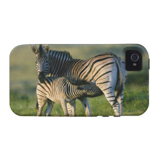 A Plains Zebra feeding her foal, Kwazulu-Natal Case-Mate iPhone 4 Covers