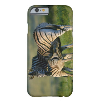A Plains Zebra feeding her foal, Kwazulu-Natal Barely There iPhone 6 Case