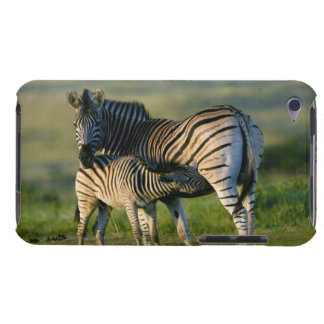A Plains Zebra feeding her foal, Kwazulu-Natal Barely There iPod Cases
