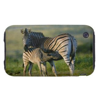 A Plains Zebra feeding her foal, Kwazulu-Natal iPhone 3 Tough Covers