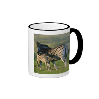 A Plains Zebra feeding her foal, Kwazulu-Natal Mug