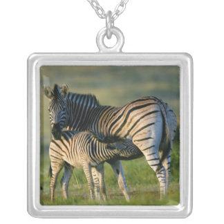 A Plains Zebra feeding her foal, Kwazulu-Natal Personalized Necklace