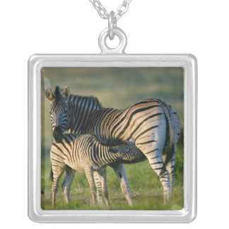 A Plains Zebra feeding her foal, Kwazulu-Natal Silver Plated Necklace