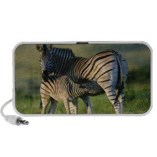 A Plains Zebra feeding her foal, Kwazulu-Natal Mini Speaker