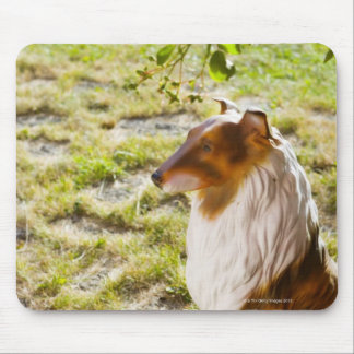 A plastic dog in a garden. mouse pad