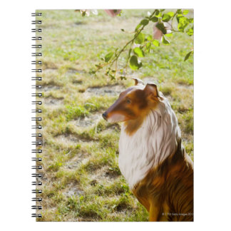 A plastic dog in a garden. notebooks