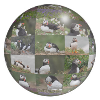 A Plate Full of Puffins