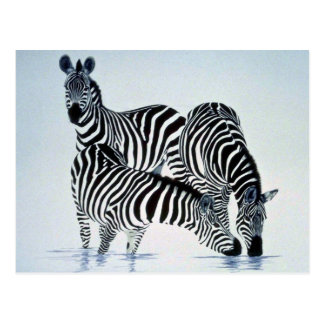 A play on stripes, Zebras Post Card