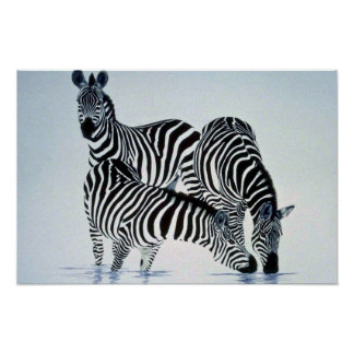 A play on stripes, Zebras Poster