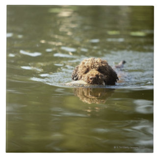 A playful dog cools off in the summer heat. tile