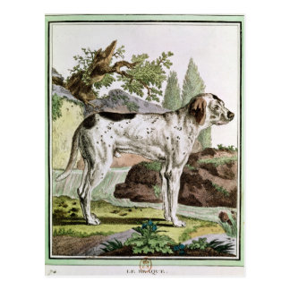A Pointer, illustration from 'Histoire Postcard