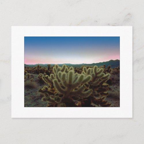 A Pointy View Postcard