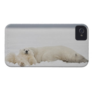 A polar bear cub lies in snow with it's mother blackberry bold case